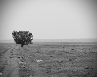simple photograph - black and white - minimalist photograph - tree photography - simple art - zen art - meditation art - landscape photo