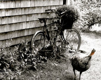 Back Yard Bike and  Turkey - Garden art -  Country  - Rusty Bike -  Home Decor - Wall Decor - Nature - Landscape - Yard Photograph
