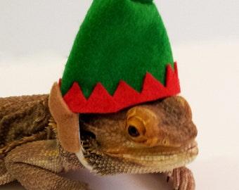 Bearded Dragon Clothing! Elf Hat!