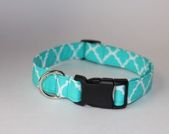 Quarterfoil in Aqua Dog Collar