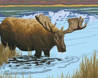 Moose Drinking at Lake - Yukon, Alaska (Art Prints available in multiple sizes)