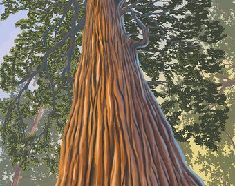 Muir Woods National Monument, California - Looking Up Tree (Art Prints available in multiple sizes)