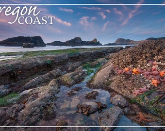 Oregon Coast - Tidepool (Art Prints available in multiple sizes)