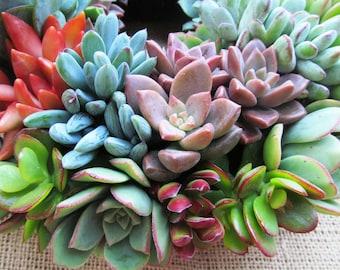 Succulent Wreath 10 inch