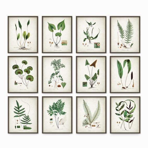 Green Plant Prints Set Of 12 Antique Botanical Green Art