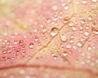 Pink and yellow art, rain picture, water drops photography, art print 11x14, girls bathroom wall art, bathroom picture, macro photography