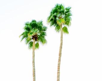 Palm Trees, nature photo, bedroom art, home decor, nature prints, coastal photography, palm tree photography, palms wall art, beverly palm