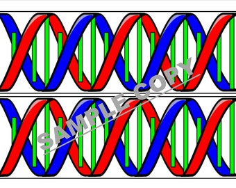 Teaching resources DNA strand border for classroom notceboards
