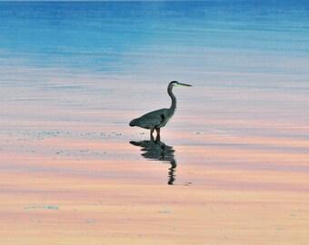 Great Blue Heron Photograph {Fine Art Bird Print, Wildlife Photography, Nature Picture, Pink Blue Pastel Sunset Photo, Ocean Artwork, Decor}
