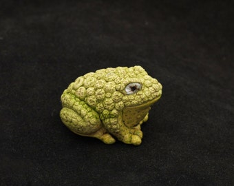 Brilliant Warty Toad