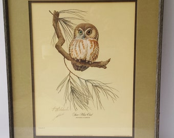 Signed Guy Coheleach 1969 Print of a Saw Whet Owl Part of the Private Collection of Mrs. Guy Coheleach