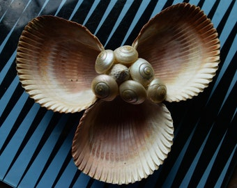 Seashell Catchall Dish