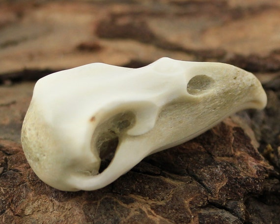 Raven skull deer antler carving bird jewelry gothic boho