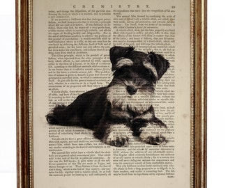 Miniature Schnauzer puppy Dog, beautiful Art Print on Upcycled Dictionary Book page 8'' x 10'' inches