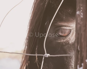 Horse Photo, Wall Decor, Print