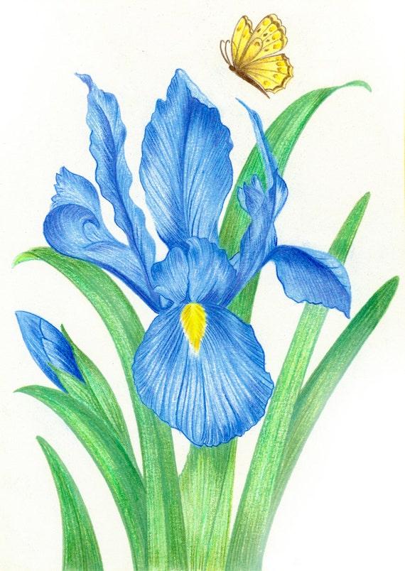 Drawings of Flowers |Flowers Color Drawings