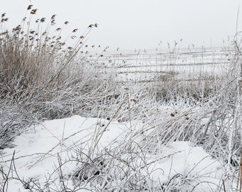 Nature Photography - Landscape Photography - Cape Cod Photography - Winter Photography - Snow - Marsh