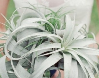 Airplant Tillandsia Living Bridal Bouquet w/ FREE Groom's Bout