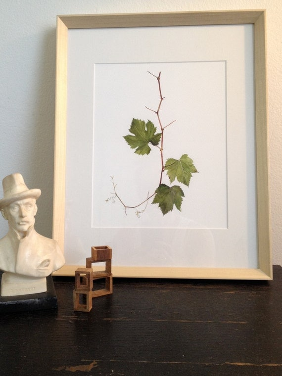 Grape Leaf with Vine-- Prospect Avenue. Hollywood, California (Watercolor Art Print)
