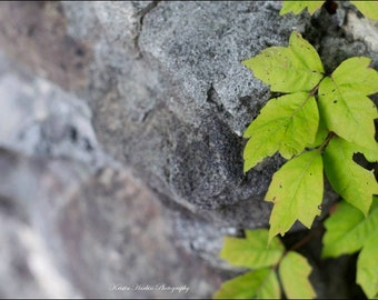 Rock and Green Leaves Print