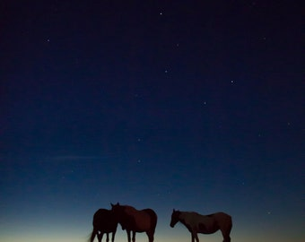 Ursa & Equid - Canvas Photography Print, Ponies on Assateague Island, Stars and Sky, Nature and Landscapes, National Parks