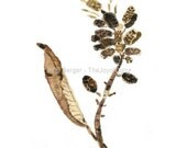 watercolor print Leaf and pod, dried branch art print, still life painting, botanical print, natural history, minimalist, nature art, brown