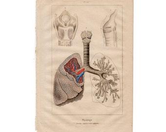 1835 LUNGS RESPIRATION original antique human medical anatomy engraving print - respiratory system