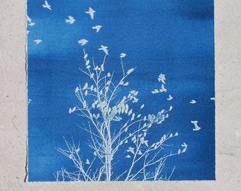 cyanotype, cottage chic decor, bird art, small art, blue print