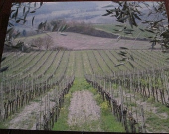 Metal Art  Italian Tuscan Vineyard looking through the Olive Tree Branches