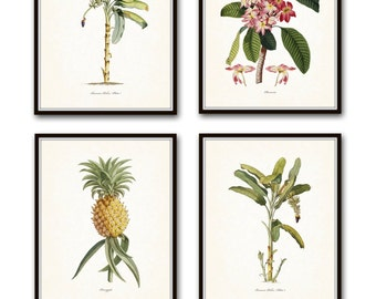 Tropical Botanical Print Set, Giclee, Art Prints, Wall Art, Beach Decor, Palm Tree Print, Pineapple Print, Coastal Art, Vintage Botanical