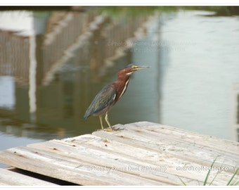 Enchanting Observer Photo - Gulf Bird Print - Bird on Wharf Art - Water Bird Photo - Beach Decor - theRDBcollection - Renee Dent Blankenship