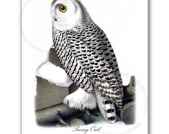 Nursery Owl Art, Snowy Owl Art print Owl Print #8 Antique Bird Print, Owl Picture, Gnosis Picture Archive Home Decor Wall Art