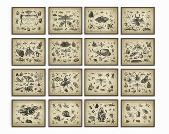 Insect Wall Art Poster Set Of 16 - Entomology Art Prints - Zoology Art Posters - Antique Book Plate Insect Art Prints - Home Decor (AB247)