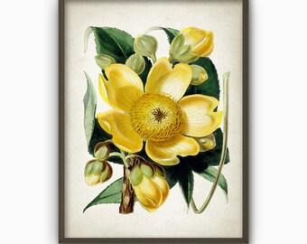 Antique Botanical Flowers Art Print - Vintage Botanical Home Decor - Antique Flower Book Plate Illustration - Flower Art Poster (AB290)
