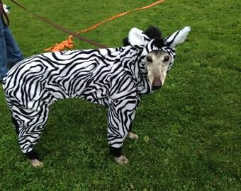 Greyhound, Zebra costume