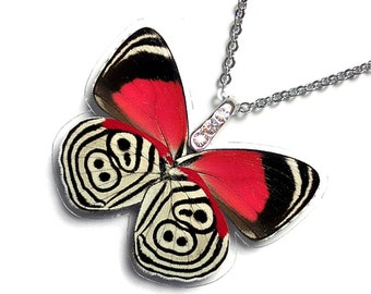 Real Butterfly Wing Necklace / Pendant (Whole Diaethria Clymena aka The 88 Butterfly - W043)