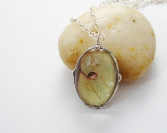 Real Moth Necklace, Luna Moth Pendant, Butterfly Wing Jewelry