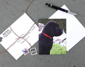 Black Lab note card - Labrador Art - Black Labrador retriever - Duck Hunting Gift - Labrador Retriever Art - Made in Vermont - Black Lab art