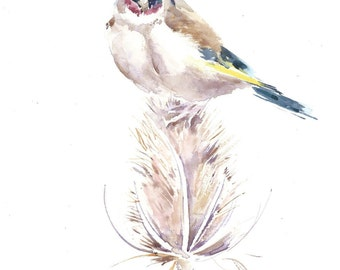 Goldfinch and teasel