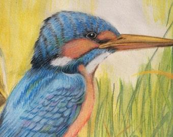 Kingfisher Watercolor Pencil Drawing Original Bird Pencil Art