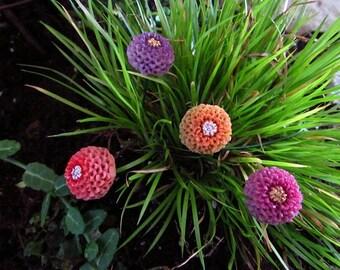 Mini Zinnia's,set of four. flowers, flower picks,Mothers day