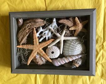 Sea Shell Nautical Shadow Box, Nautical Decor, Beach Decor, Home Decor, Coastal Decor, Star Fish, Shell Art