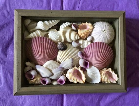 Purple And White Sea Shell Shadow Box Nautical Decor Beach