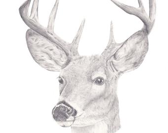 A6 Oh Deer