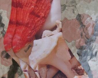 Sea Shells Socks