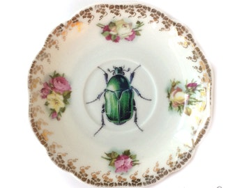 Vintage - Illustrated - Plate - Upcycled - Wall Display - China - Bug - Insect - Beetle - Altered - Antique - Plate