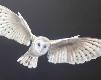 Barn owl in flight - signed print