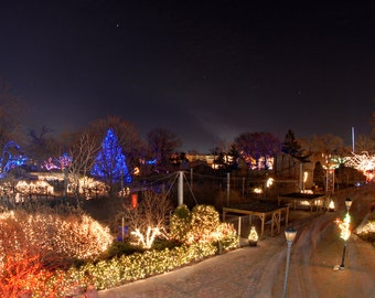 Christmas, Toledo Zoo, Lights Before Christmas, Winter, Snow, Lights, Path, Glowing, Tree