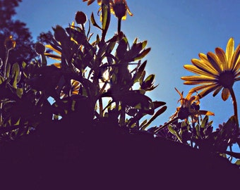 Psychedelic, Daisy, Flower, Backlit, Sky, Blue, Yellow, Cedar, Tree, Sun, Distorted, Abstract, Trippy