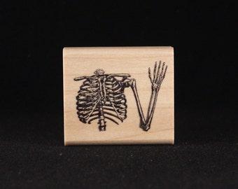 Skeleton's Upper Torso
